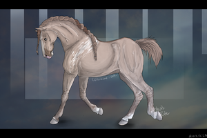 Admiral dressage + VIDEO! by Leloowe