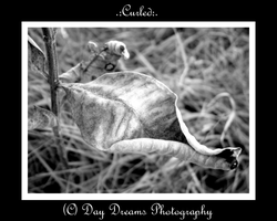 .:Curled:. by DayDreamsPhotography