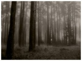 Mystic forest by skeksis86