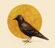 Starling by MO-ffie