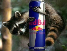 Redbull Raccoon by Littlenorwegians
