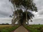 The Dark Hedges a different view by peterpateman
