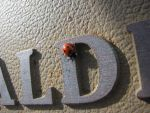 Ladybug in Waldport 1 by Cyberpriest