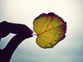 A leaf in the sky by siqna333