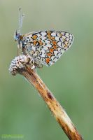 Morning Butterfly by Stefano-Coltelli