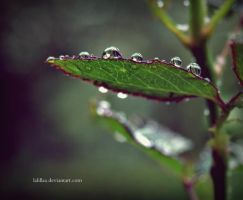 Fresh rain by LaLillaa