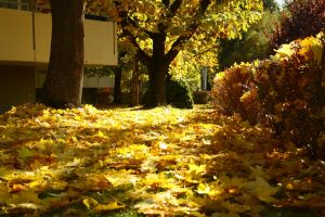 autumn leaves by hans64-kjz