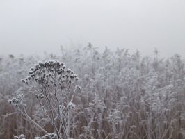 Frost and fog by louveska