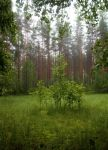 Green by KariLiimatainen