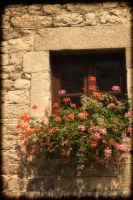 Windowflowers by Peenbuiker