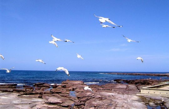Seagulls at Shellharbor by Sumple