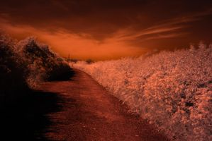 Infrared No1 by uglyogre