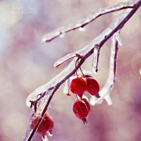 .:Frozen Sparkles:. by RHCheng
