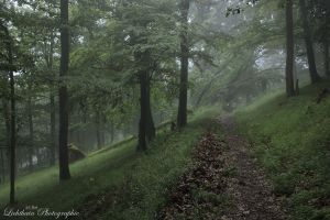 Path into the mist II by Losiane