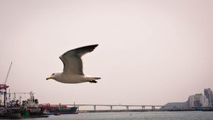 Seagull by feria233
