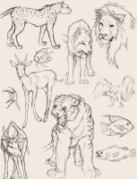 Animal Studies by Chelsee