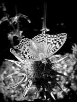 Dreaming about fragility by aneresia