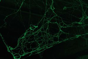 Spider Web 002 by danf83stock