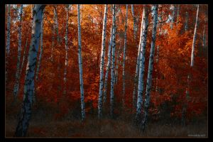 Birches wood of Dream by stg123