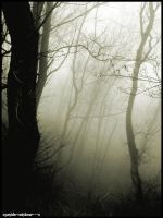 Misty Forest by cyanide-rainbow---x