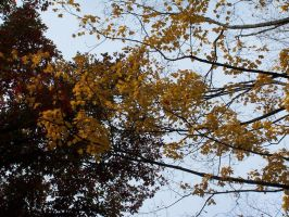 Fall Colors by tn-scotsman