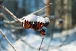 Snow and plant by Daniel-Van