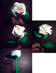 White Angled Rose by Heyro0