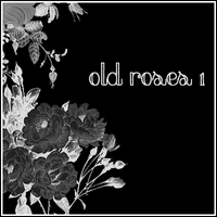 Old Roses 1 by butnotquite