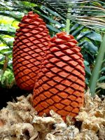 Cycad Cones by Korppi-Clicks