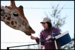 Giraffe and me by TVD-Photography