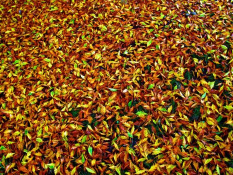 fall leaves stock by stockf8
