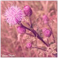 Spear Thistle (18.10.13) by LacedShadowDiamond