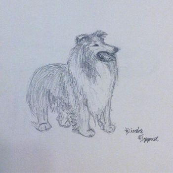 Floofy Collie by MiraclePemberton