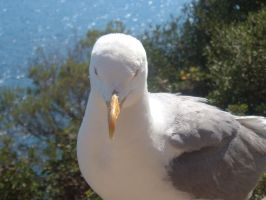 Demented seagull 1 by GothicKitzzy