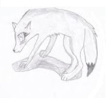 A Wolf Sketch by MoonStarWolf112