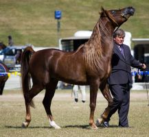 STOCK - Gold Coast show 158 by fillyrox