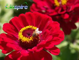 red flowers and bee by alex198