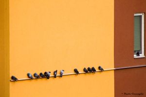 pigeons queue by Itapao
