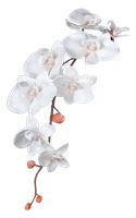 Flower 007 - Clear Cut PNG by Travail-de-lame