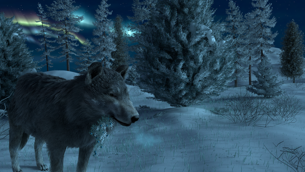Wolf and winter in Canada by VikiTar