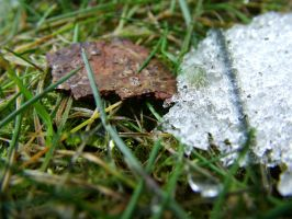 Snow and grass by PhotoElizabeth