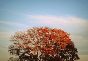Autumn tree top by LeaLion