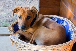 Chico in his bed by AnjaSchlegelmilch