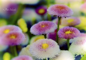 Spring colours(III). by Phototubby