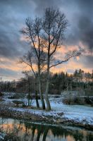 Tree over the river by BinLadin007