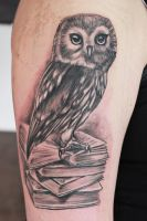 owl by Nis-Staack