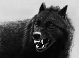 Pencil Drawing: Black Wolf by JasminaSusak