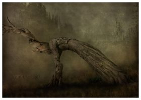 Firstborn by IreneLangholm