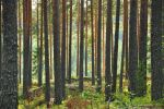 Forest harmony by Tekslus
