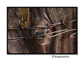 Bound Knot by kayaksailor